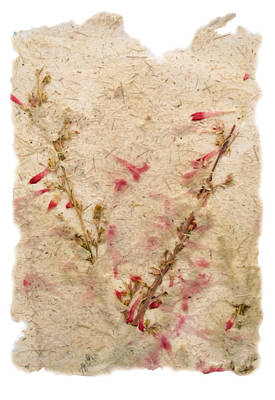Nature Center Mixed Media - Flying Penstemons by Annie Alexander