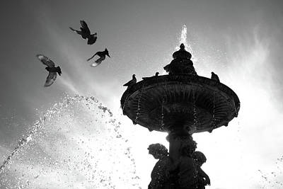 Photograph - Flying Pigeons by Carlos Caetano
