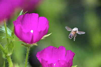 Photograph - Flying Pollen by Brian Hale
