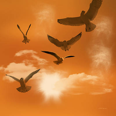 Manipulation Photograph - Flying Seagulls by Ericamaxine Price