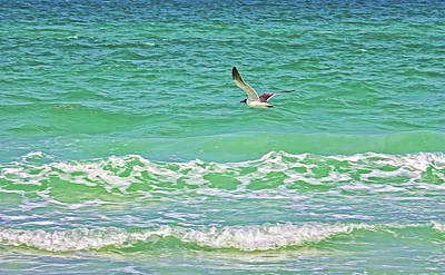 Photograph - Flying Solo by HH Photography of Florida