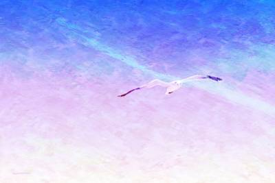 Seagull Digital Art - Flying Solo by Wally Boggus
