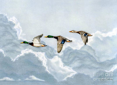 Mallard Duck Painting - Flying South by Sarah Batalka