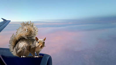 Etc Digital Art - Flying Squirrels by Deb Breton