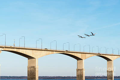 Photograph - Flying Swans By The Bridge by Kennerth and Birgitta Kullman