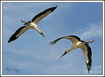 Photograph - Flying The Friendly Sky by Mariarosa Rockefeller
