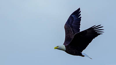 Photograph - Flying Through The Air by Jeff at JSJ Photography