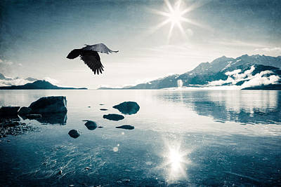 Photograph - Flying To The Sun by Michele Cornelius