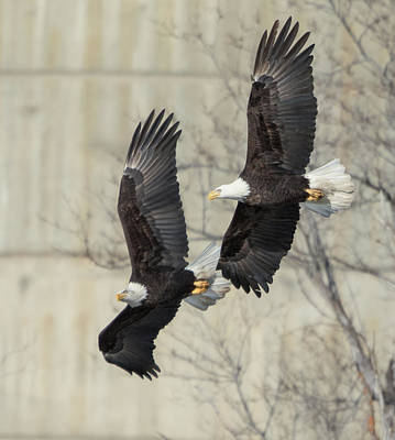 Photograph - Flying Together by Angie Vogel