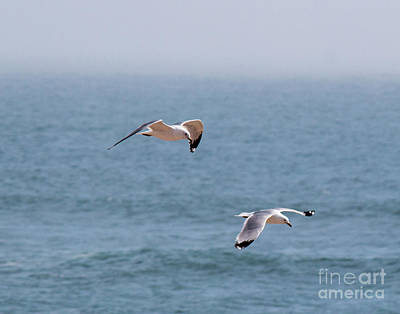 Photograph - Flying Together by Cheryl Del Toro