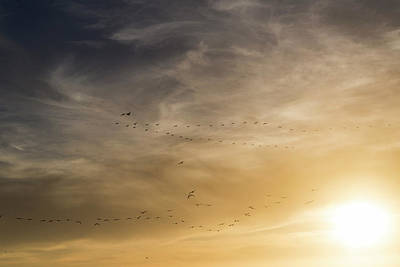 Photograph - Flying Too Close To The Sun by Alex Lapidus
