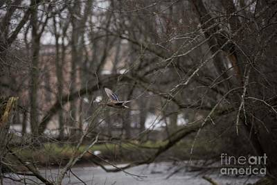 Photograph - Flying Upriver by David Bearden