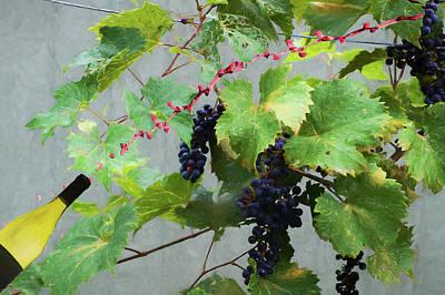 Photograph - Flying Wine by Dan Friend