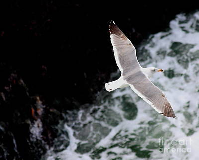 Photograph - Flying With A Gull . 40d4549 by Wingsdomain Art and Photography