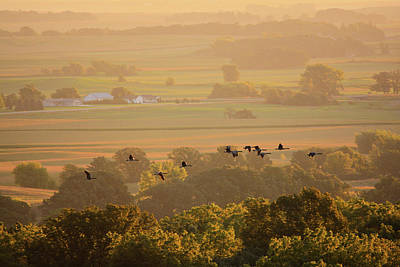 Photograph - Flying With Geese by Bonfire Photography