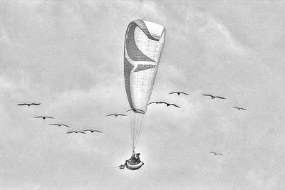 Photograph - Flying With The Birds In Monochrome by SC Heffner