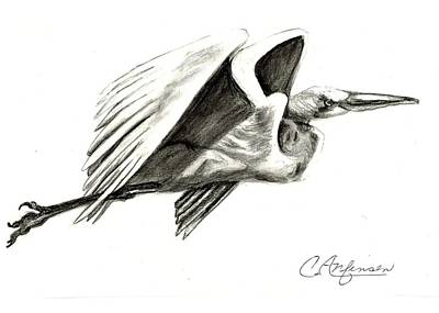 Egret Drawing - Flying Your Way by Carol Allen Anfinsen