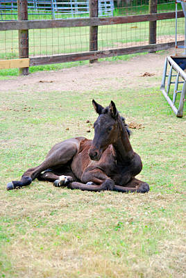 Photograph - Foal 3 by Max Mullins