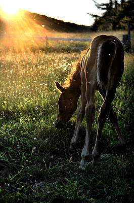Photograph - Foal At Sundown by Emily Stauring