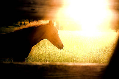 Photograph - Foal Dawning by Emily Stauring