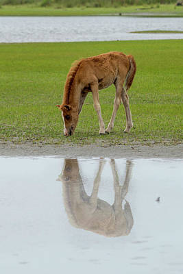 Photograph - Foal Eating Grass By The Water by Dan Friend