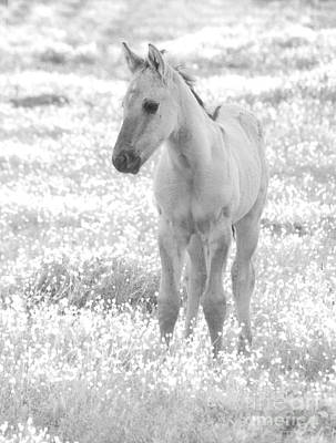 Photograph - Foal In Dreamy Field Black And White by Jim And Emily Bush