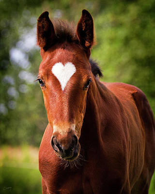 Christina Conway Royalty-Free and Rights-Managed Images - Foal With A Heart - THE ORIGINAL by Christina Conway