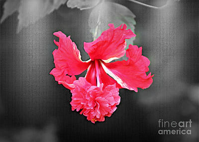Focal Bw Red Hibiscus Multilayered Art Print