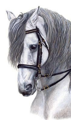 Dressage Horse Drawing - Focus by Kristen Wesch