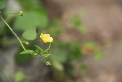 Focus On Yellow Flowers Original