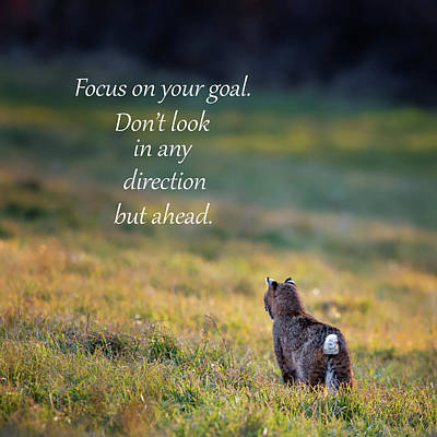 Photograph - Focus On Your Goal by Bill Wakeley