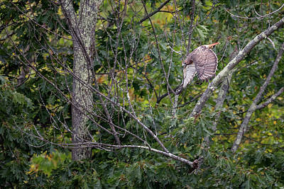 Hawk Photograph - Focused by Bill Wakeley