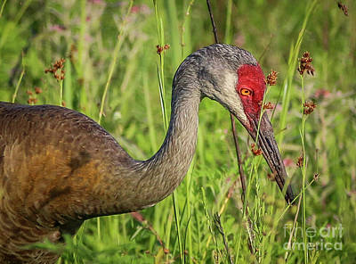 Photograph - Focused Crane by Tom Claud