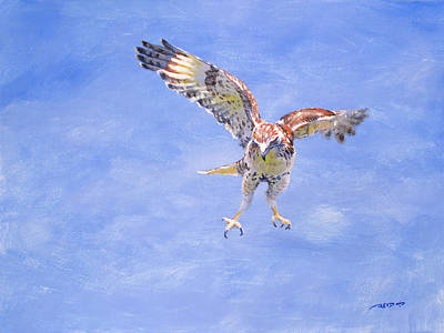 Painting - Focused Hawk by Christopher Reid