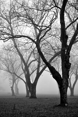 Photograph - Fog 1 by Beverly Hammond