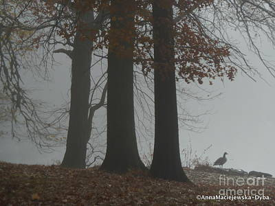 Photograph - Fog 2 by Anna Folkartanna Maciejewska-Dyba