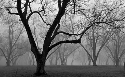 Photograph - Fog 2 by Beverly Hammond