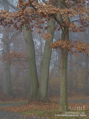 Photograph - Fog 3 by Anna Folkartanna Maciejewska-Dyba