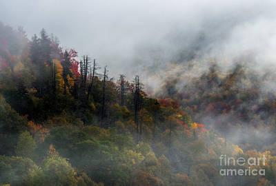 Photograph - Fog And Color. by Itai Minovitz