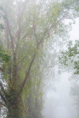 Photograph - Fog And Cottonwood by Robert Potts
