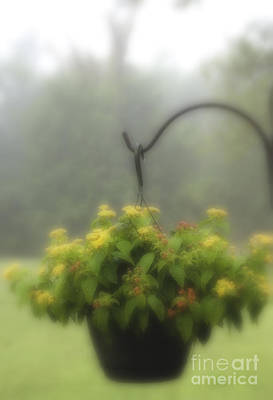 Photograph - Fog And Flowers by Fred Lassmann