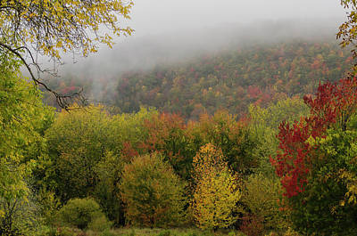 Photograph - Fog And Foliage by Roger Lewis
