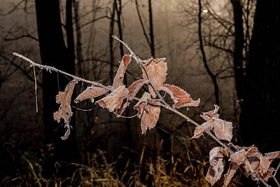 Photograph - Fog And Frost by Annette Berglund