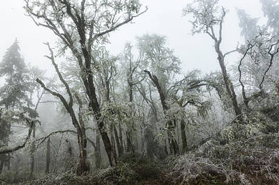 Photograph - Fog And Ice by Belinda Greb
