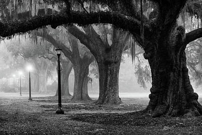 Photograph - Fog And Oaks by David Morel