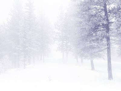 Photograph - Fog And Snow by Tara Turner