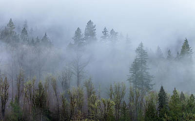 Photograph - Fog And The Cascade by Jonathan Nguyen
