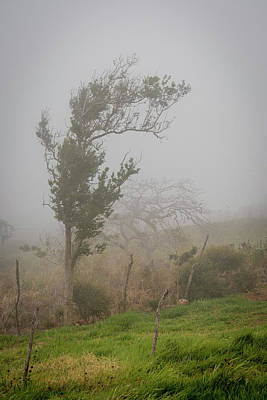 Rowing Royalty Free Images - Fog and Wind Royalty-Free Image by Debbie Ann Powell