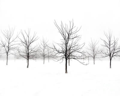 Fog And Winter Black Walnut Trees  Art Print