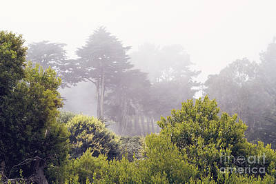 Art Print featuring the photograph Fog At Lands End by Cindy Garber Iverson